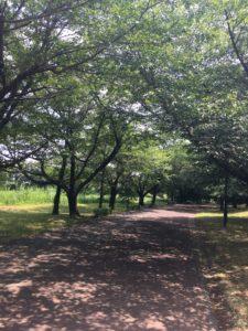 岩槻文化公園内のジョギングコース