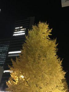日本橋の紅葉