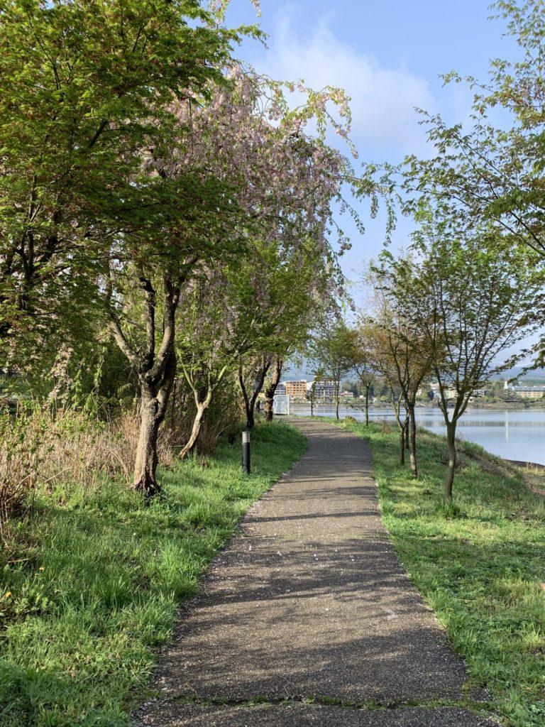 河口湖の湖畔の歩道